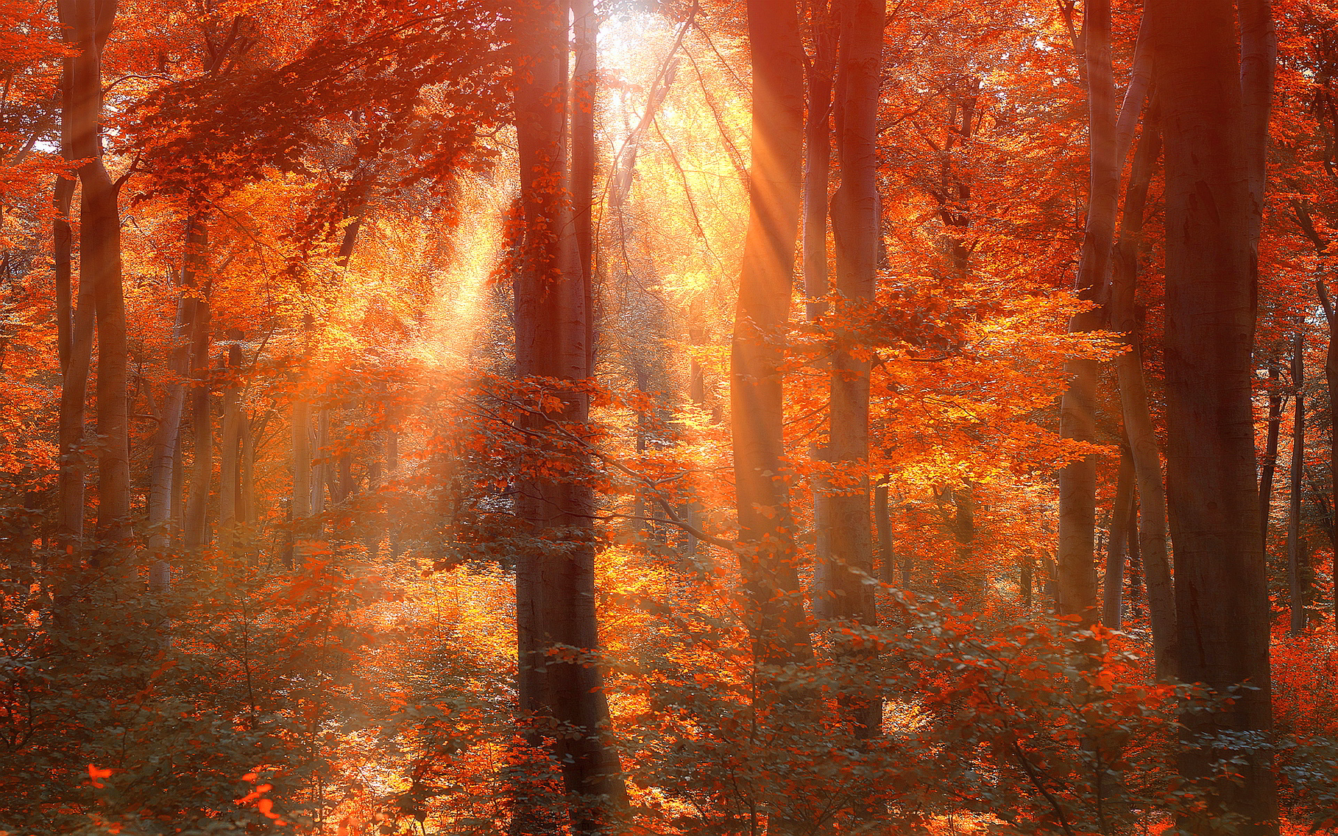 4k Fall Painting Wallpapers Autumn Forest Background Download Free Pixelstalk Net