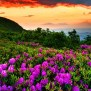 Full Hd Nature Wallpapers Free Download Pixelstalk Net