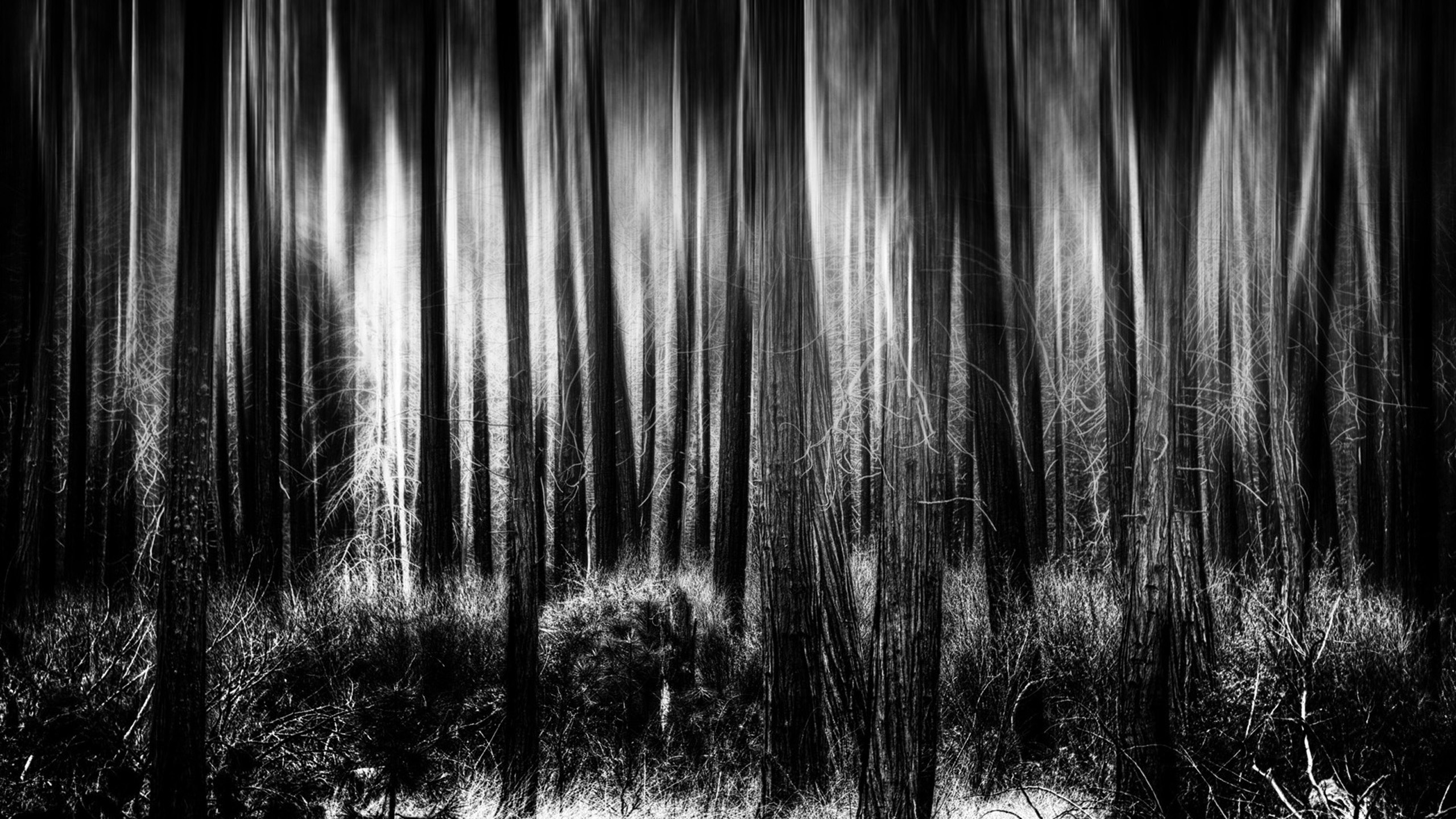 Cartoon Images Fall Wallpaper Black And White Forest Background For Desktop Pixelstalk Net