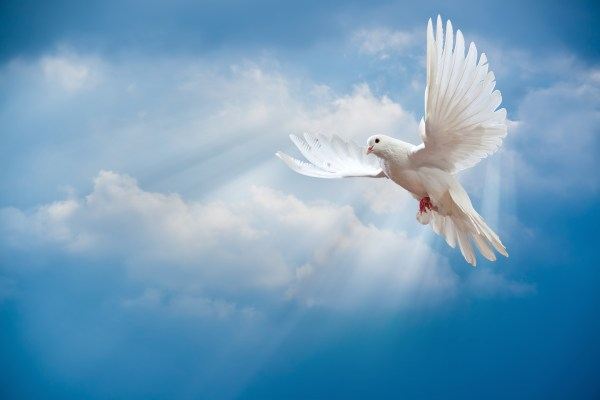 Dove Backgrounds Free