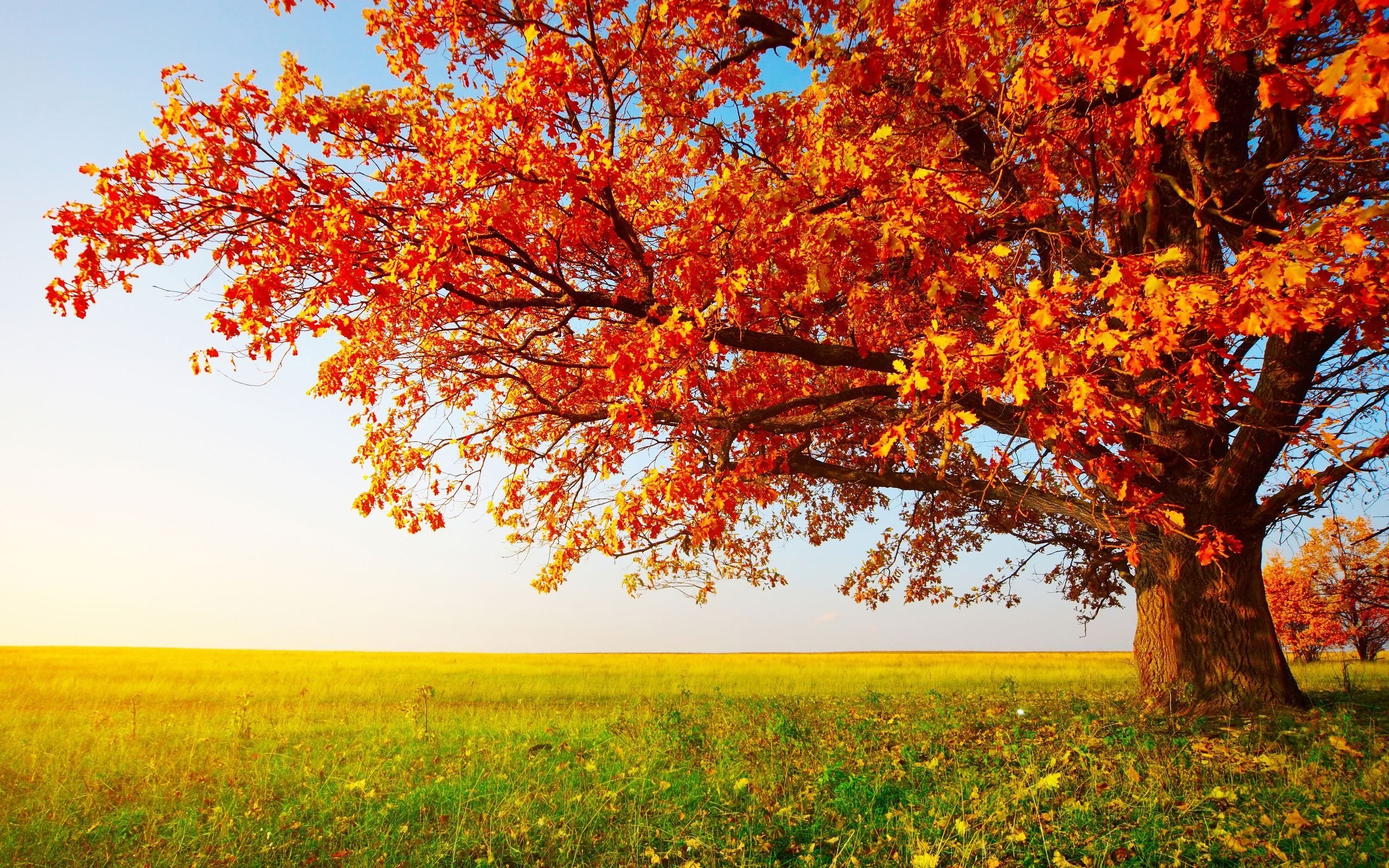 Fall Calendar Desktop Wallpaper November Wallpapers Hd Free Download Pixelstalk Net