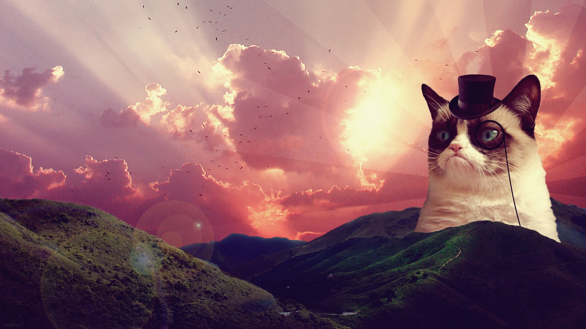 3d Laser Wallpapers Cat Wallpaper Tumblr Pixelstalk Net