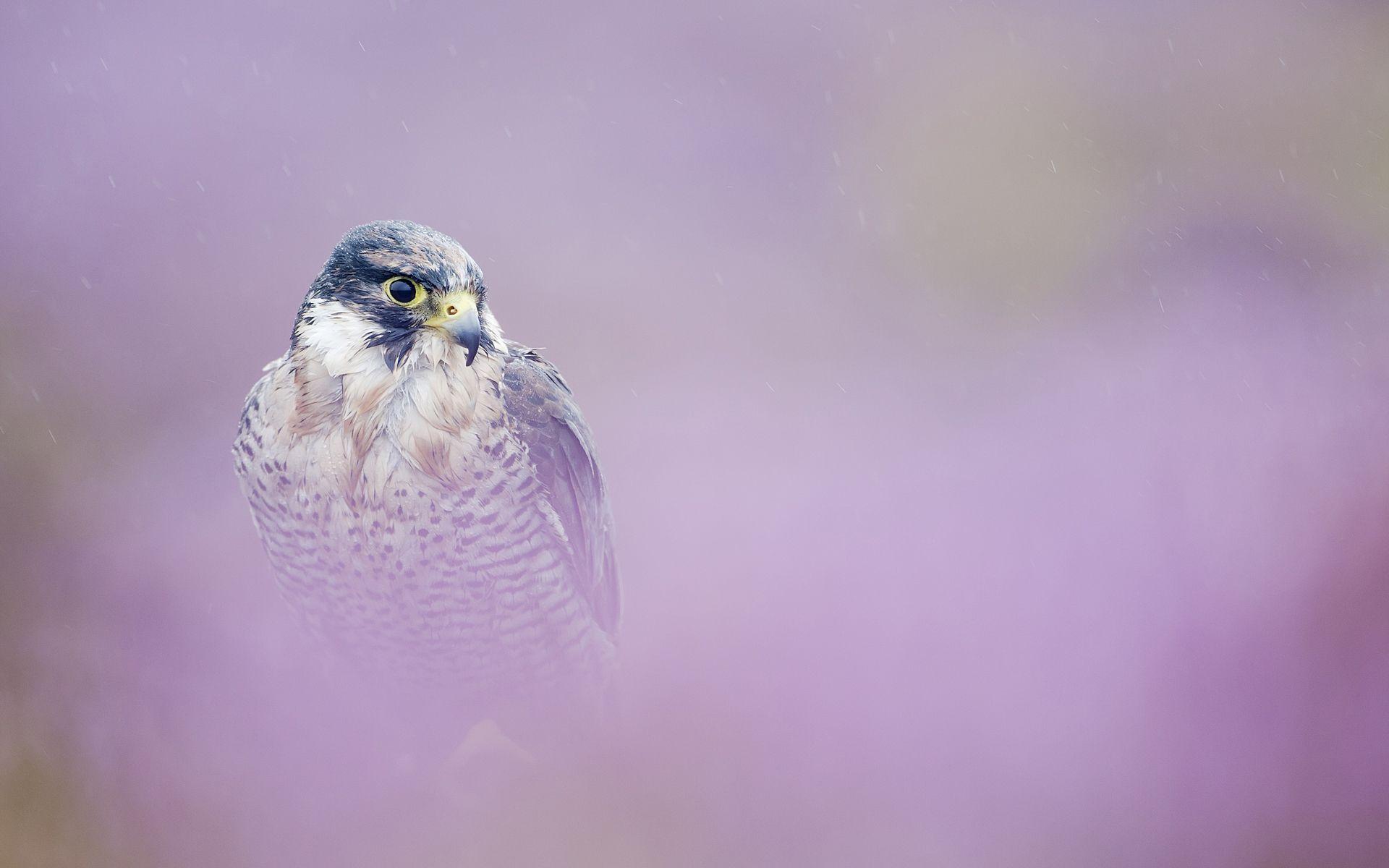 Free Fall Season Wallpapers Free Falcon Backgrounds Pixelstalk Net