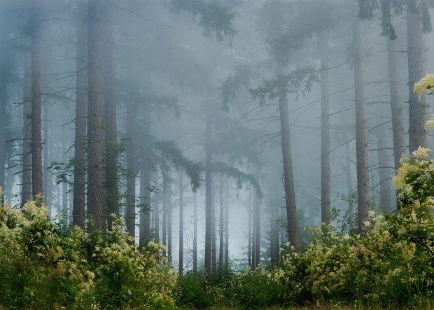 Thanksgiving Wallpaper Hd Foggy Forest Backgrounds Free Download Pixelstalk Net