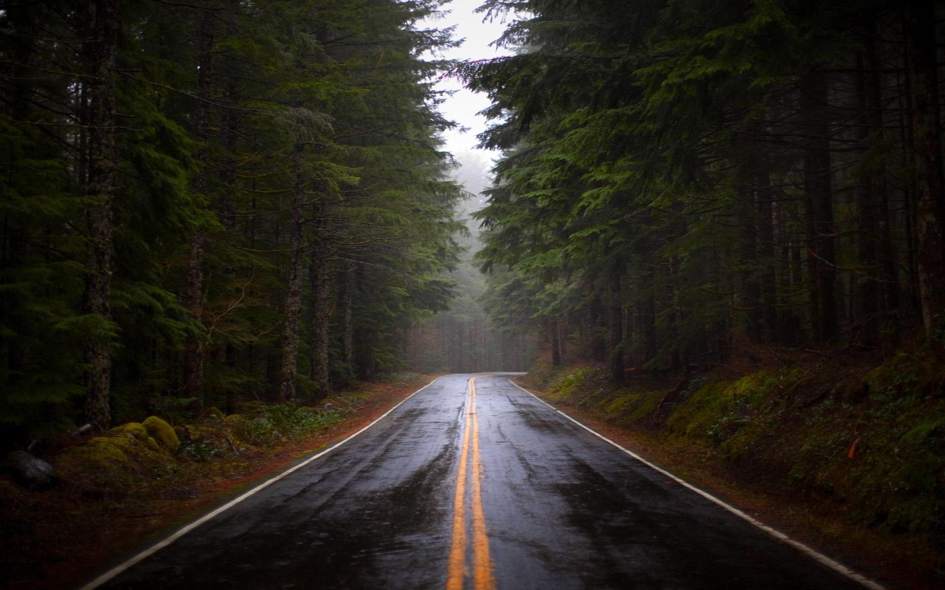 Rainy Fall Day Wallpaper Foggy Forest Backgrounds Free Download Pixelstalk Net