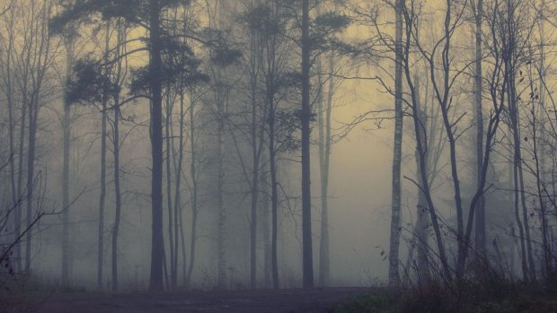 Foggy forest hd wallpapers.