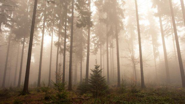 Thanksgiving Wallpaper Iphone Foggy Forest Wallpapers Hd Pixelstalk Net