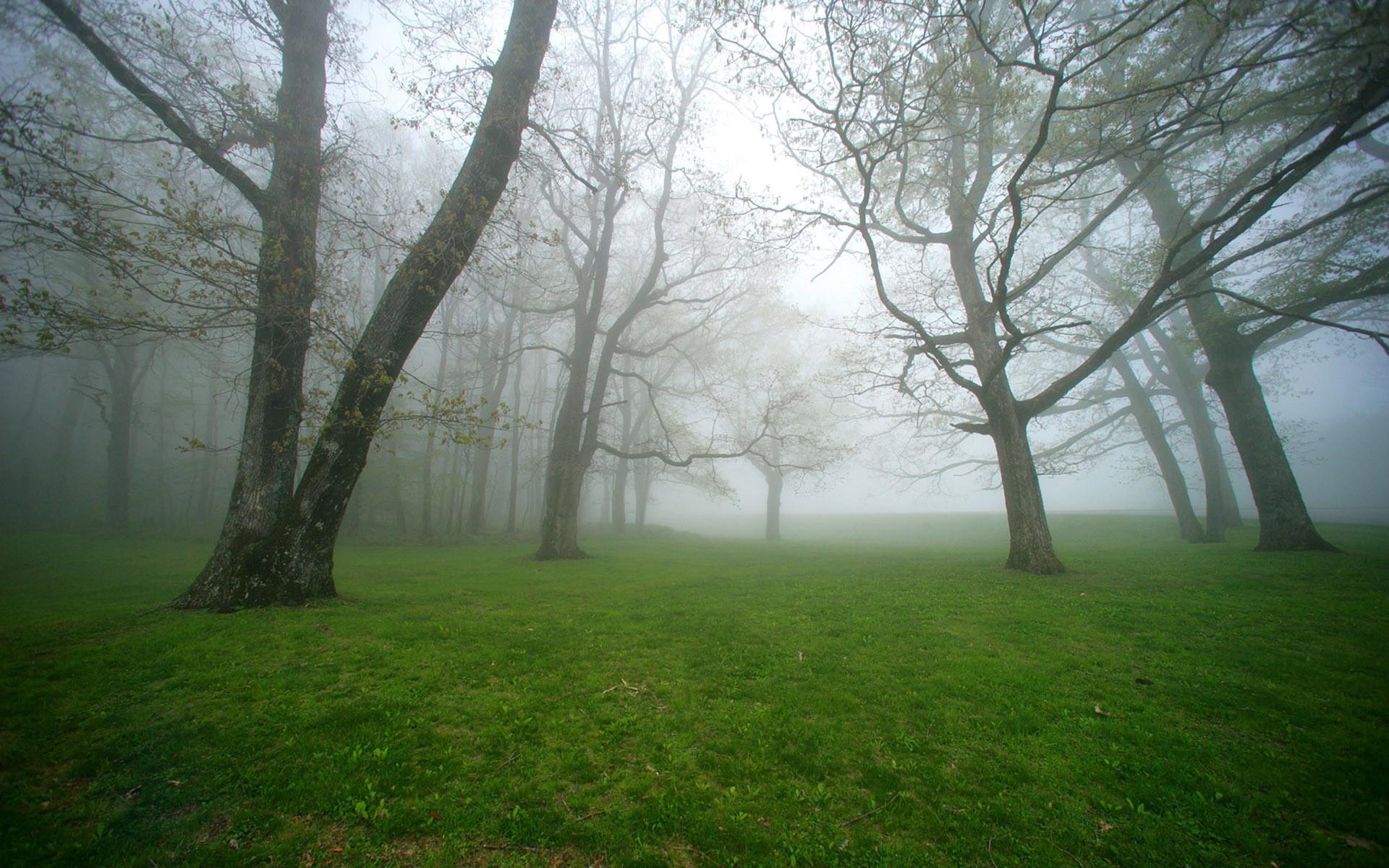 Thanksgiving 3d Wallpaper For Pc Foggy Forest Backgrounds Free Download Pixelstalk Net