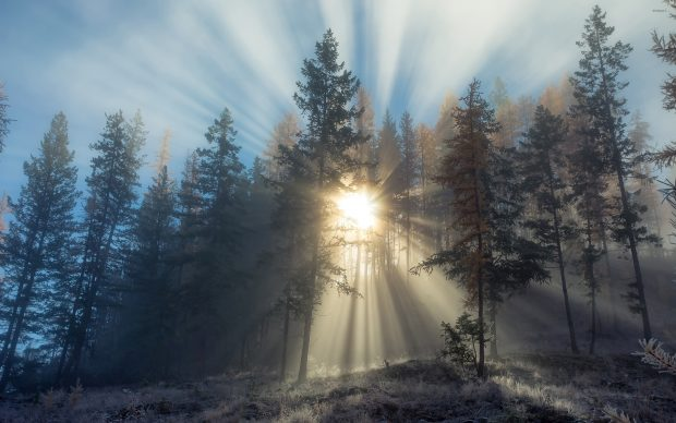 Sun light piercing through the foggy forest images 2880x1800.