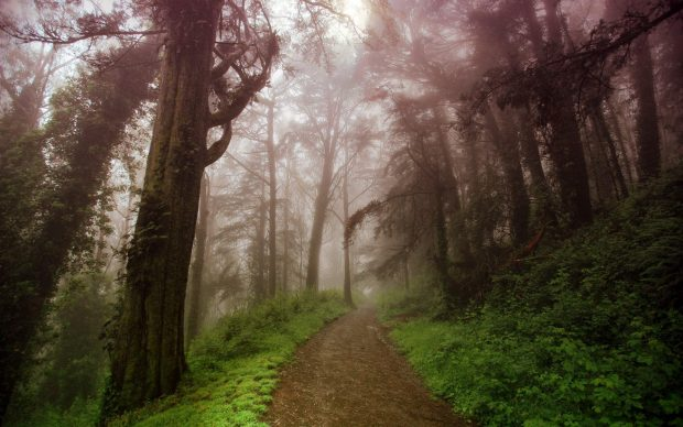 Wallpapers path in the foggy forest.