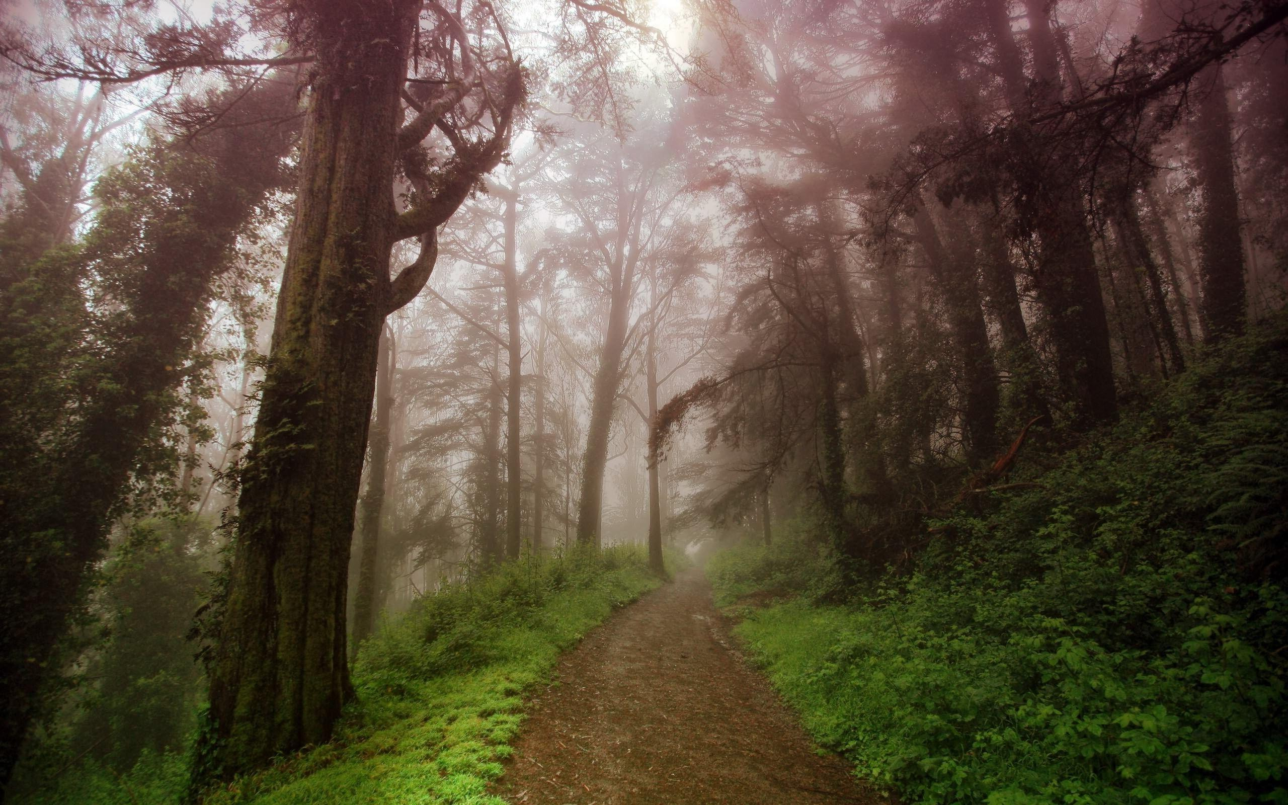 Free 3d Spring Wallpaper Foggy Forest Backgrounds Free Download Pixelstalk Net