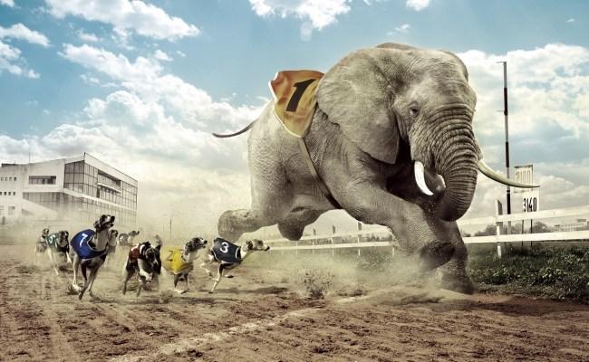 Elephant Desktop Wallpapers Pixelstalk Net