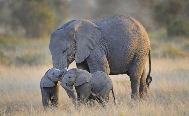 Hd Baby Elephant Wallpaper Pixelstalk Net