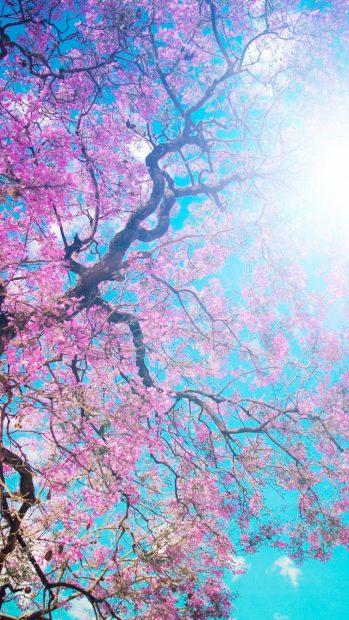 Whatsapp Wallpaper Android Hd Cherry Blossom Iphone Hd Wallpaper Pixelstalk Net