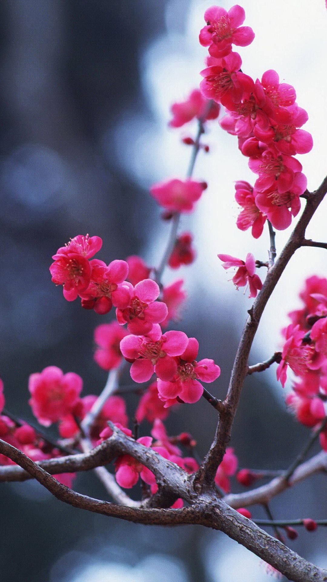 Inspirational Quotes Wallpaper Hd Free Download Cherry Blossom Iphone Hd Wallpaper Pixelstalk Net