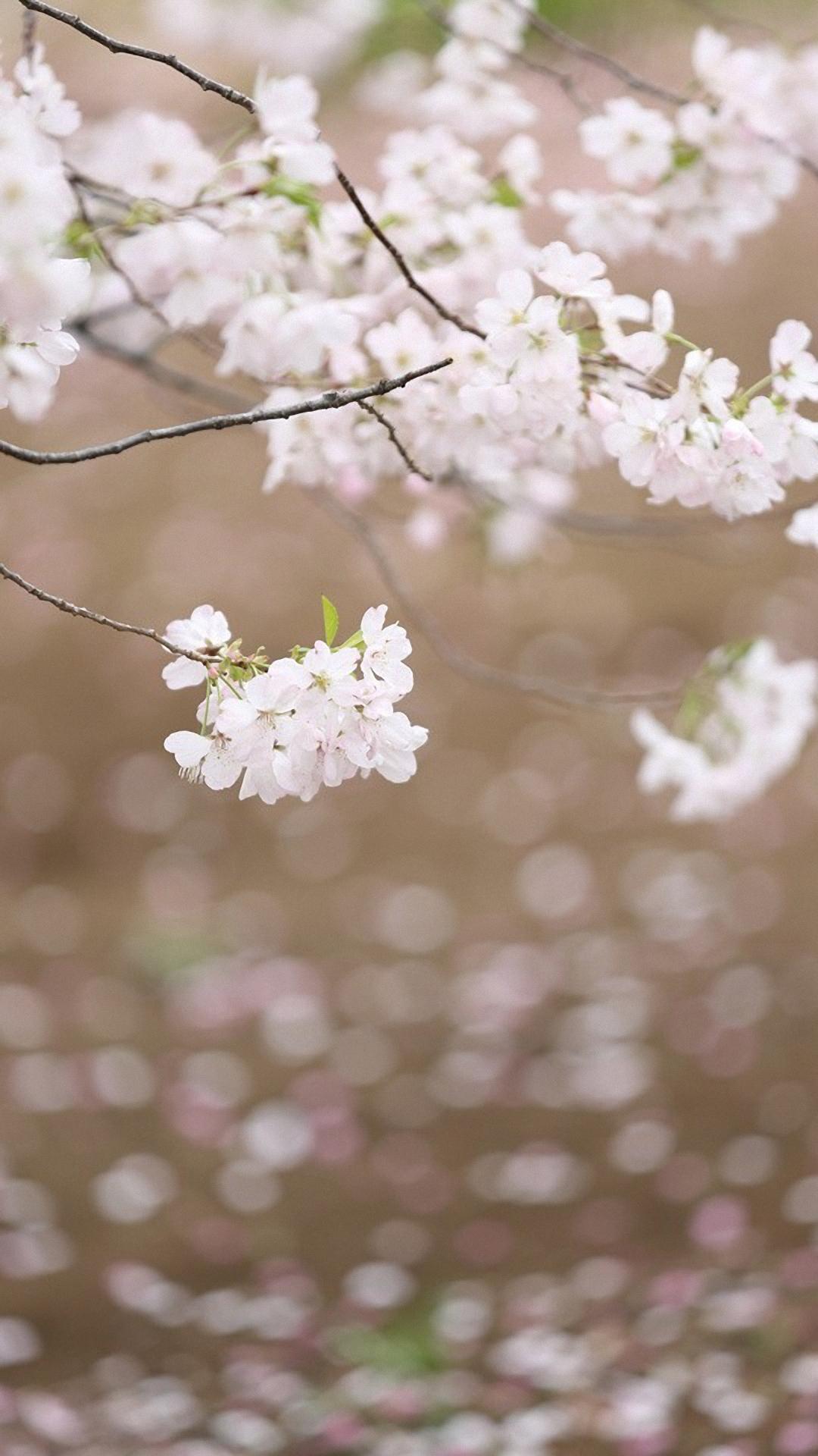 Free 3d Hulk Wallpaper Cherry Blossom Iphone Hd Wallpaper Pixelstalk Net