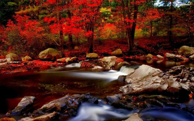 Fall Leaves Hd Wallpaper Autumn River Hd Wallpaper Pixelstalk Net