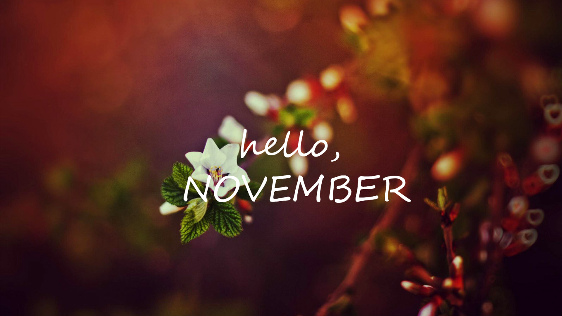Beautiful Girl Hand Wallpaper Hello November Hd Wallpapers Pixelstalk Net