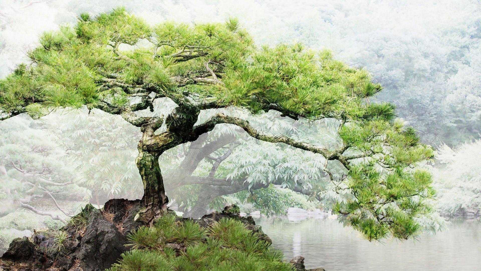 Wallpapers With Inspirational Quotes Free Download Bonsai Tree Wallpaper For Desktop Pixelstalk Net