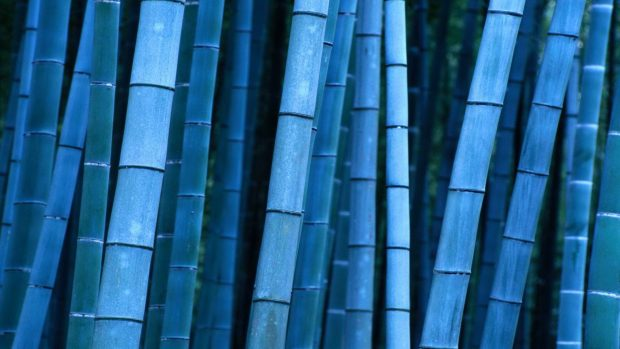 Supreme Wallpaper Hd Iphone X Desktop Bamboo Hd Wallpapers Pixelstalk Net