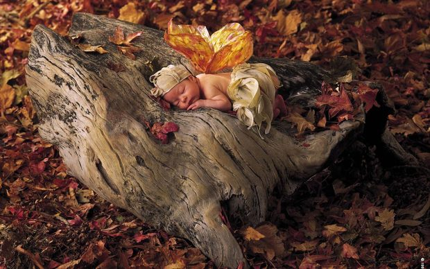Cell Phone Fall Wallpaper Thanksgiving Fairy Wallpapers Pixelstalk Net