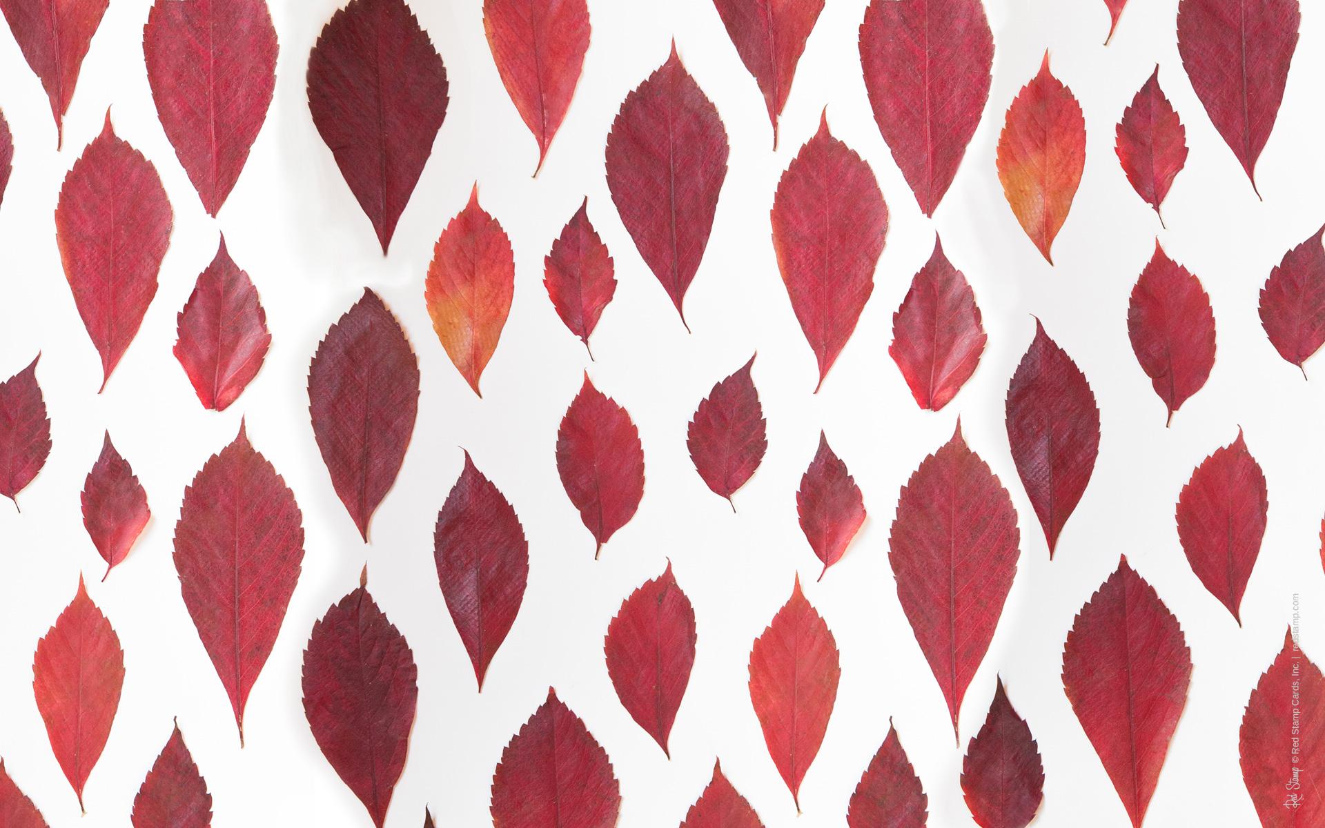 Fall In Love Wallpaper November Wallpapers Hd Free Download Pixelstalk Net