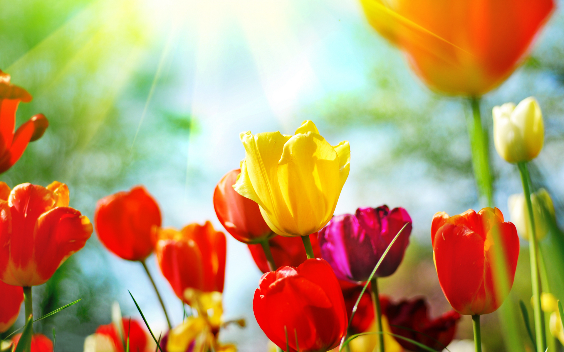 spring background free download