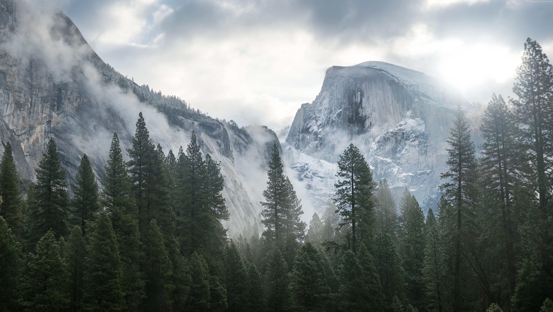 Iphone X Reddit Wallpaper Forest Backgrounds Hd Free Download Pixelstalk Net