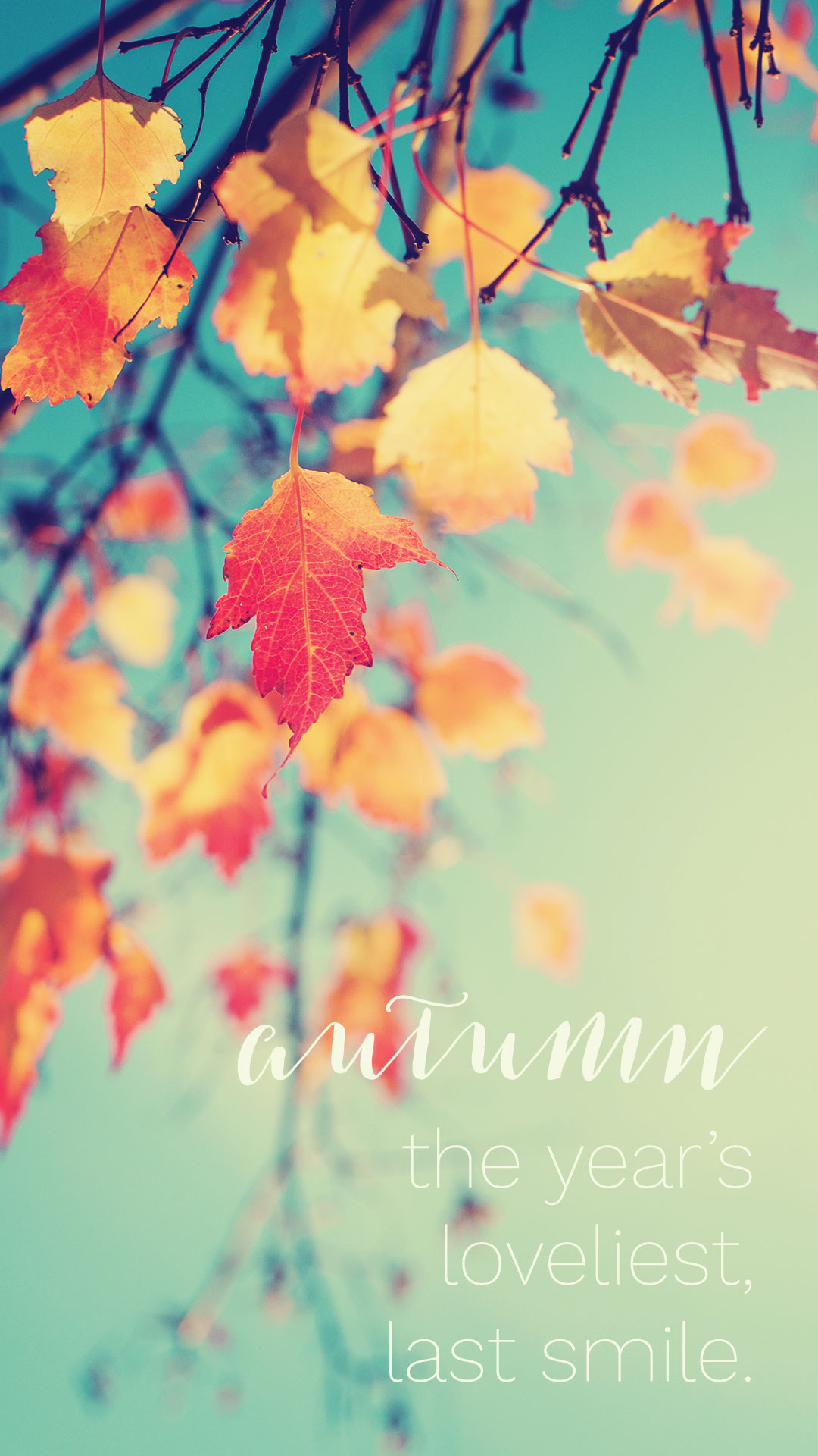Cute Rustic Fall Wallpapers November Wallpapers For Mobile Iphone Android Pixelstalk Net
