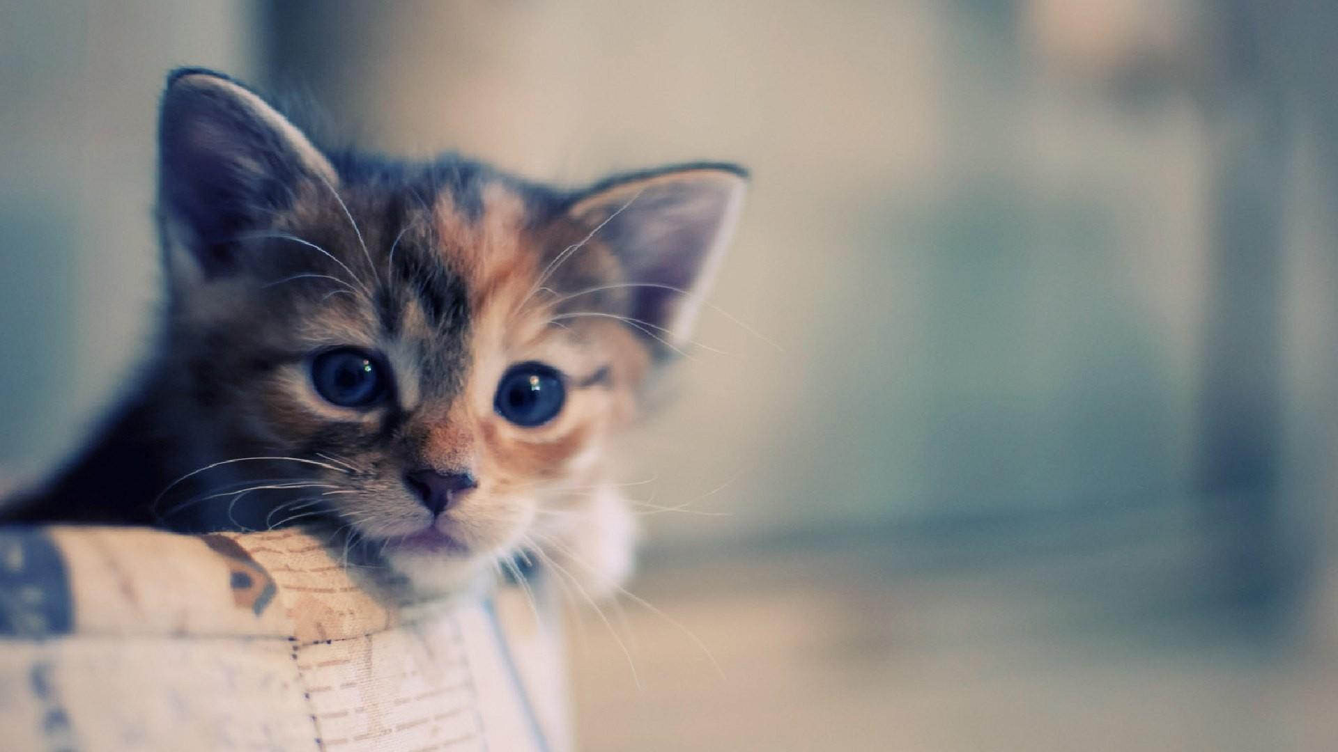 Cute Hello Kitty Face Wallpaper Cat Backgrounds Desktop Pixelstalk Net