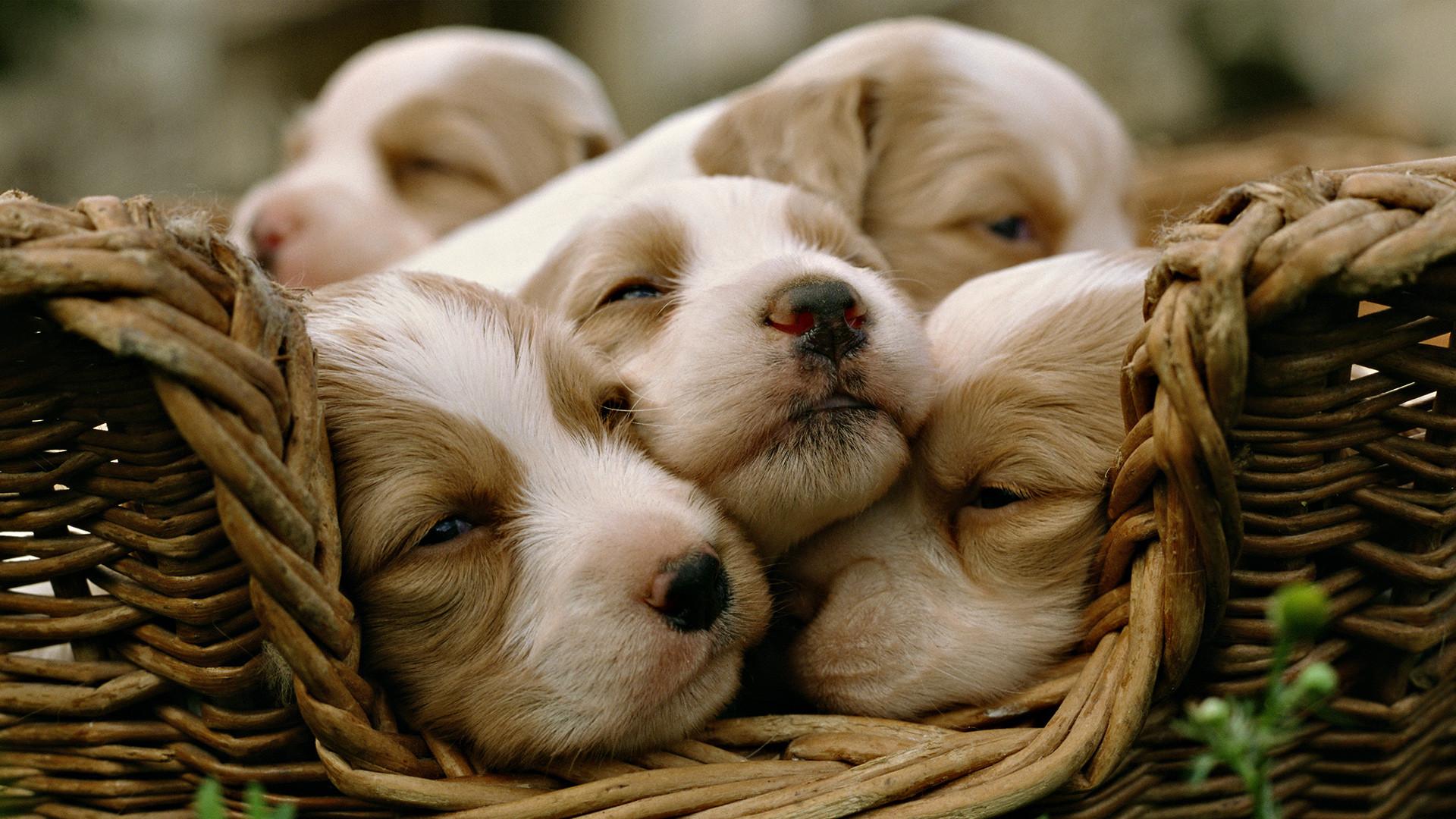 Download Wallpaper Of Cute Puppies Cute Baby Animal Wallpapers Pixelstalk Net