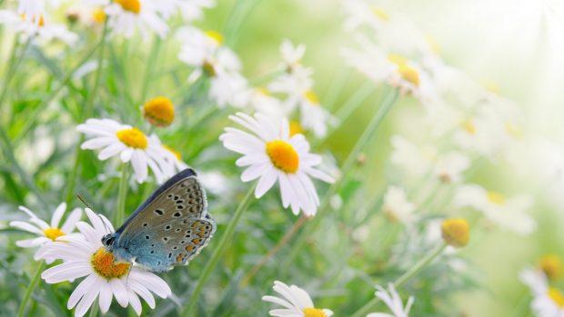 Free Animal Wallpaper Backgrounds Flower Butterfly Wallpaper Pixelstalk Net