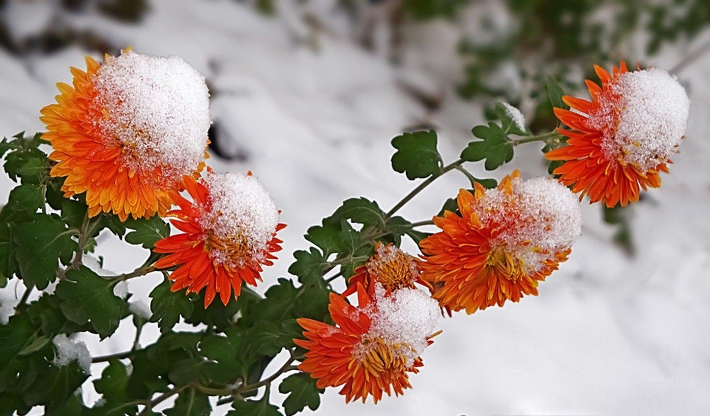 Cute St Patricks Day Wallpaper Winter Flowers Wallpaper Hd Pixelstalk Net