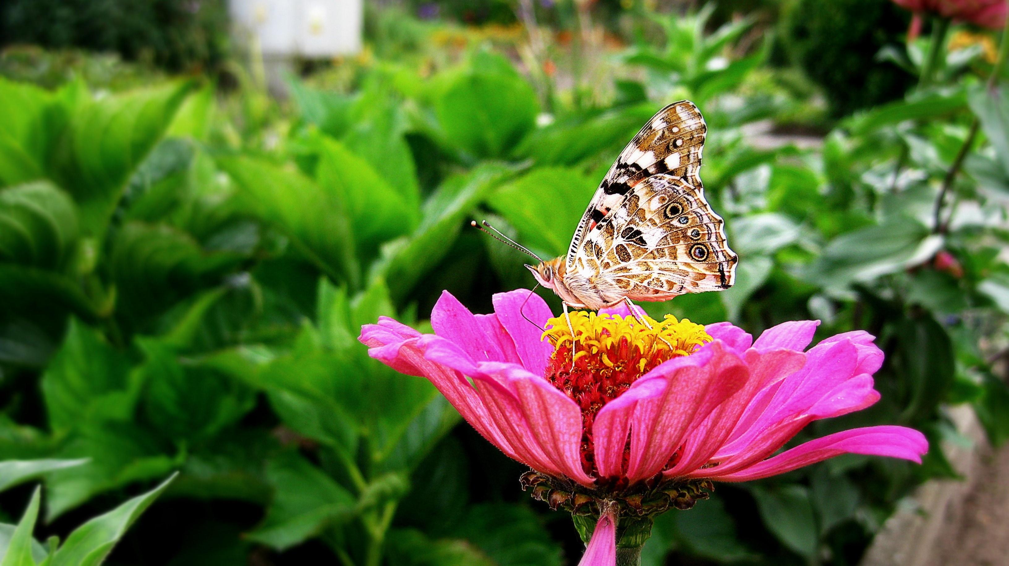 Cute Flower Wallpapers For Mobile Flower Butterfly Wallpaper Pixelstalk Net