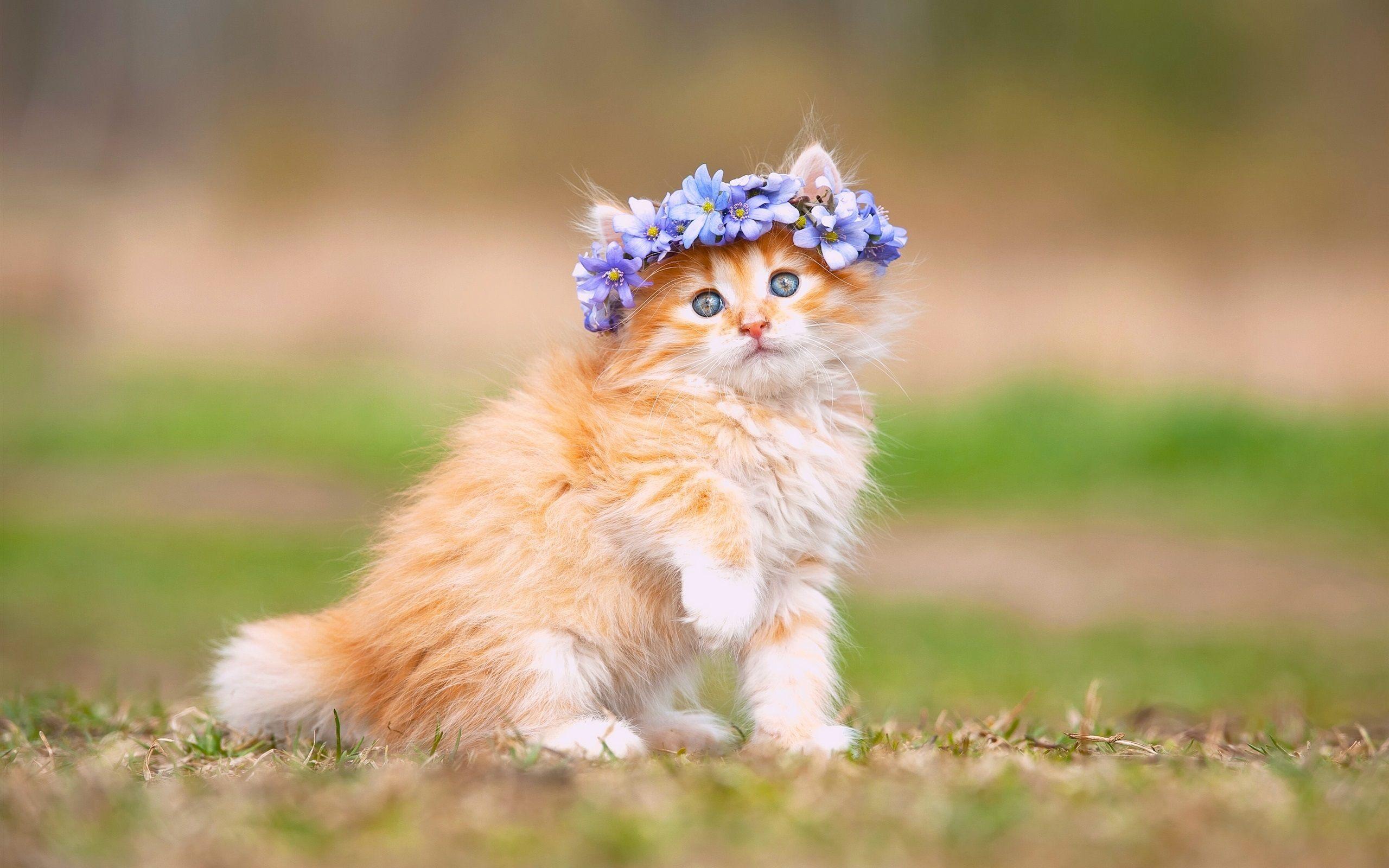 Lovely Cat Wallpaper HD  PixelsTalkNet
