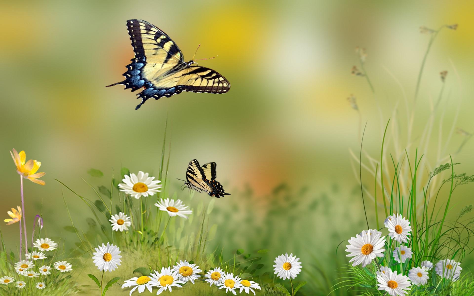 Summer Wallpaper Iphone 6 Flower Butterfly Wallpaper Pixelstalk Net