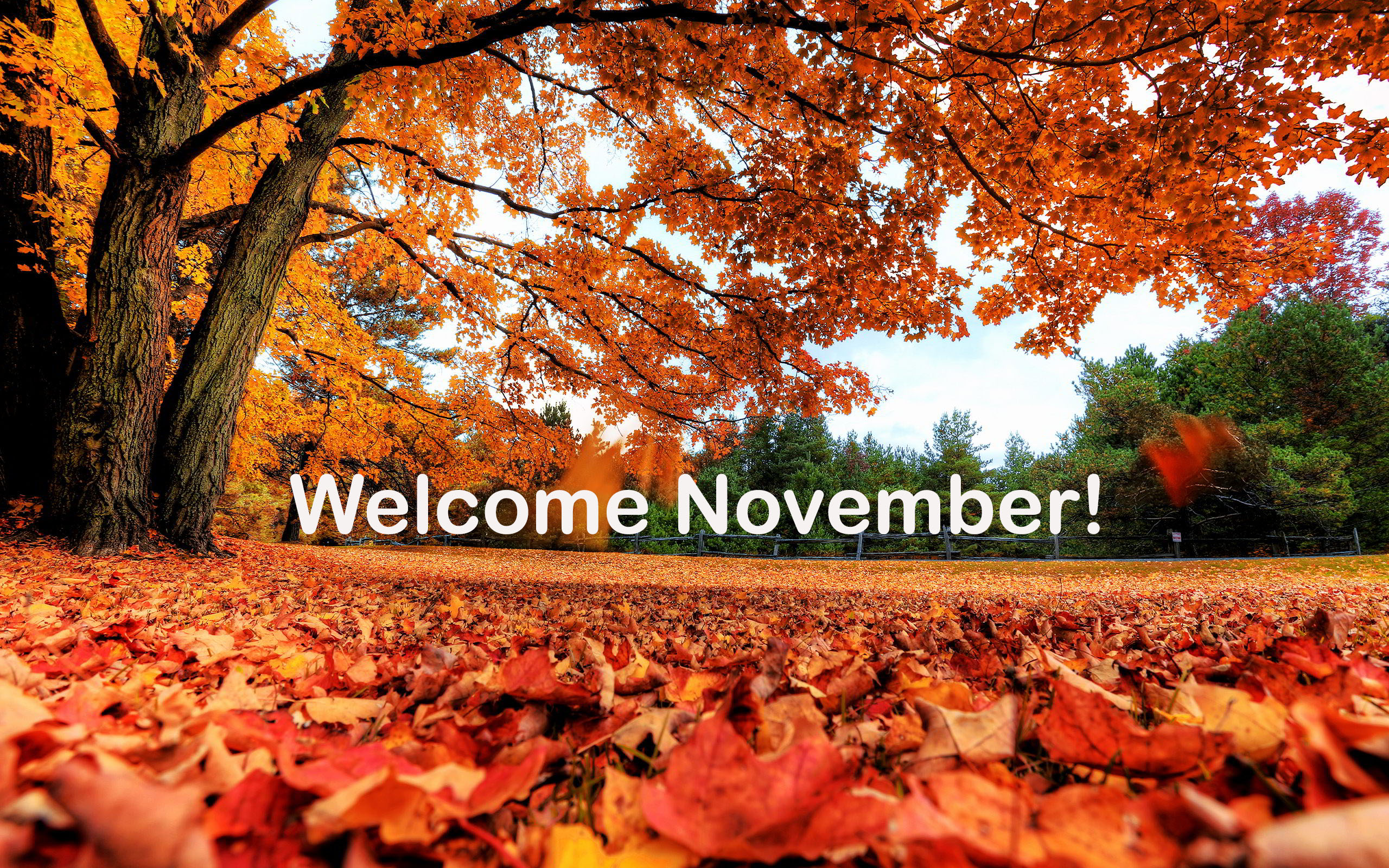 Free Fall Desktop Wallpapers Backgrounds November Images Will Surprise You Pixelstalk Net
