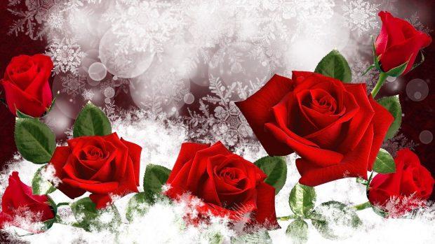 Iphone X Awesome Wallpaper Winter Flowers Wallpaper Hd Pixelstalk Net