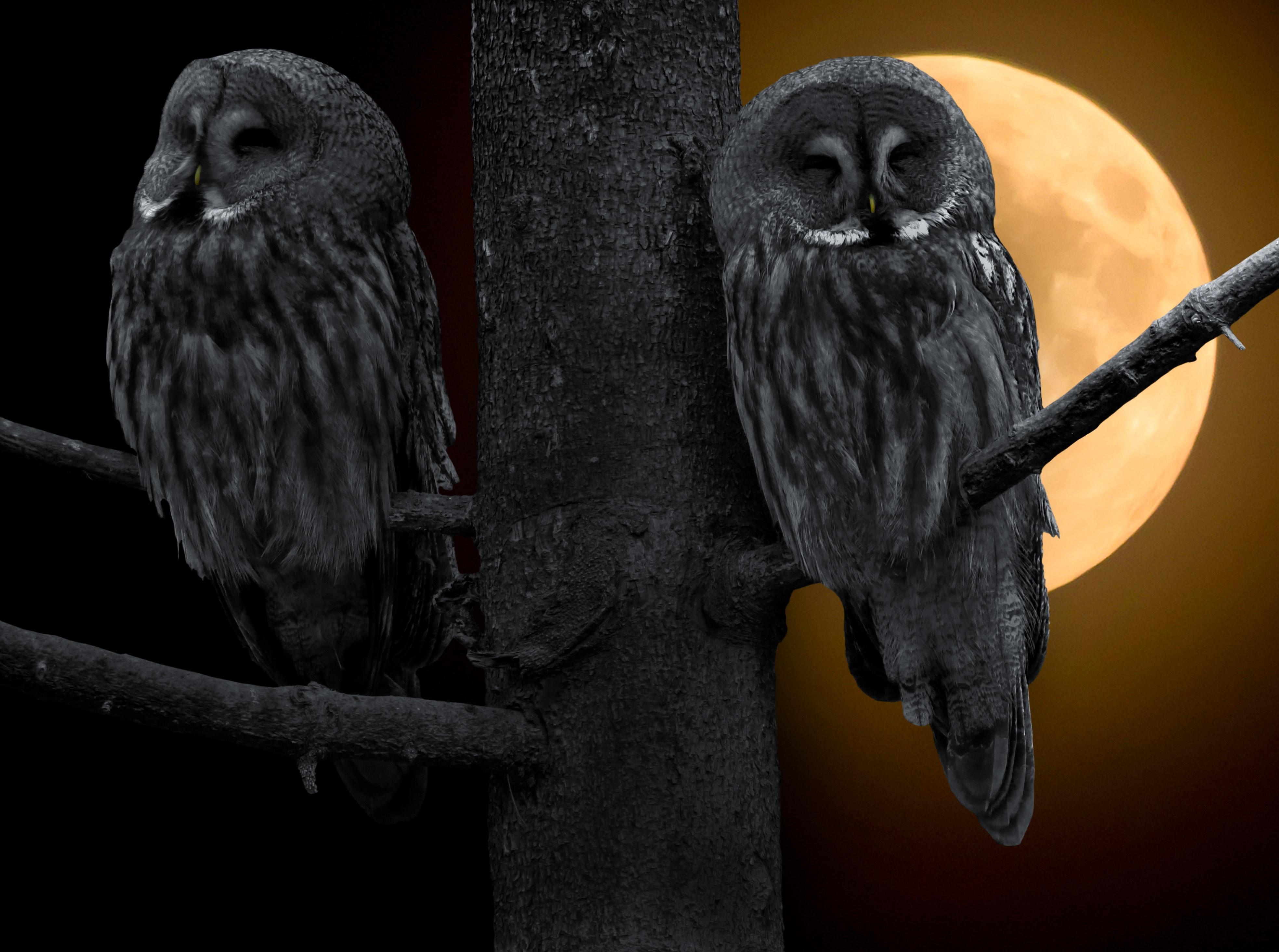 Free Animal Wallpaper Backgrounds Dark Owl Wallpapers Pixelstalk Net