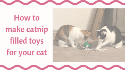 How To Make Catnip Toys For Your Cat