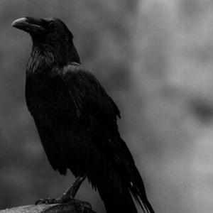 Sacred Voice with Raven | Animal Medicine | SouLodge