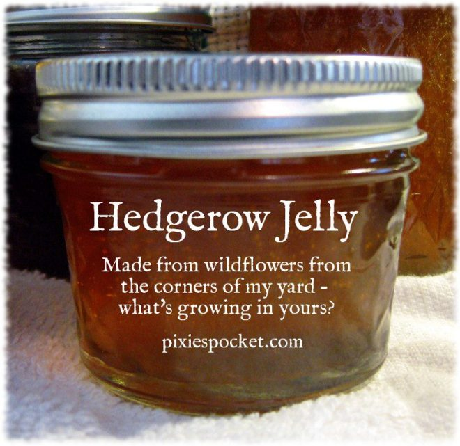 Hedgerow Jelly - sweet treat made from wildflowers from the corners of the yard - pixiespocket.com