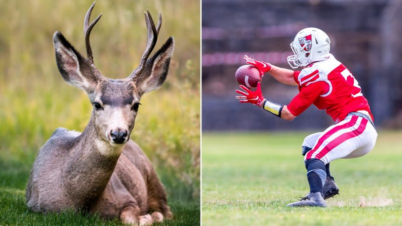 Wildlife and Sports