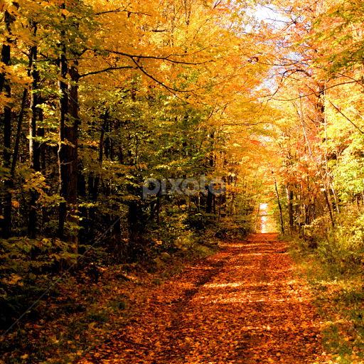 Image result for autumn forest
