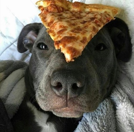 pizza dog jasperpizza