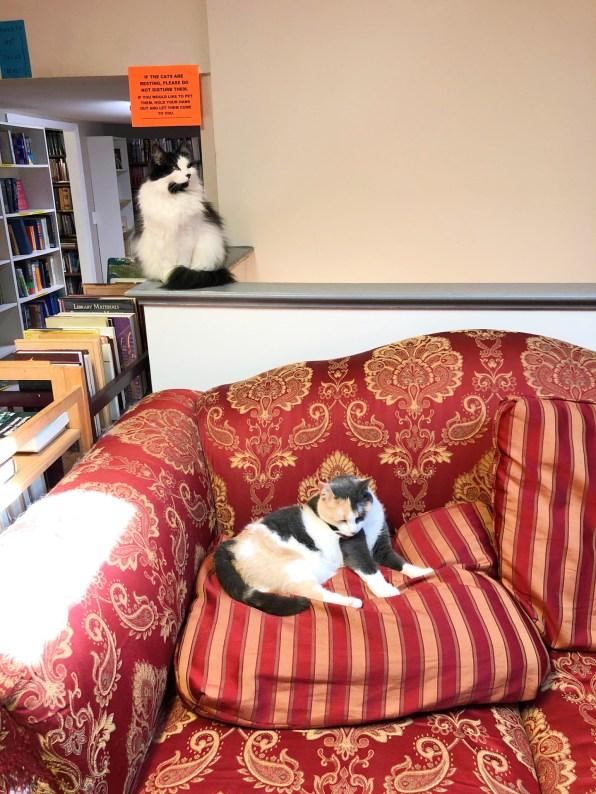 book barn cats