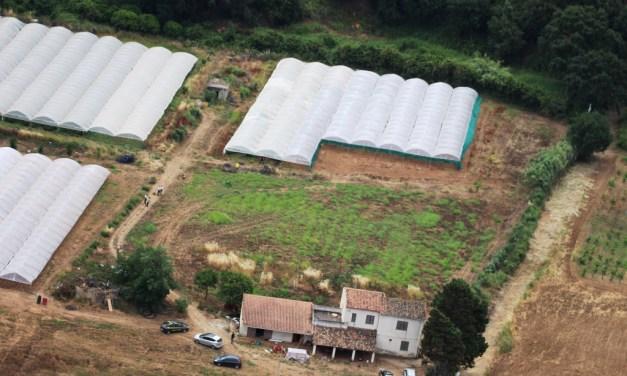 Pizzo, scoperta piantagione di marijuana da 20 milioni di euro – Corriere della Calabria