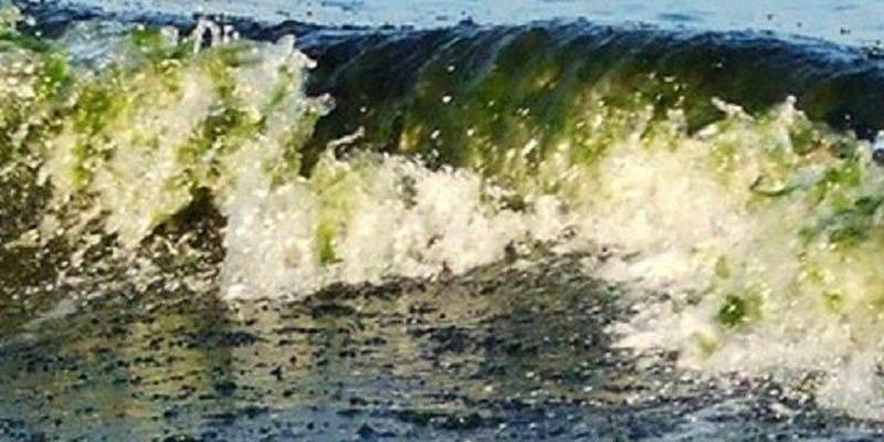 Nessuna fioritura di alghe tossiche nel mare vibonese