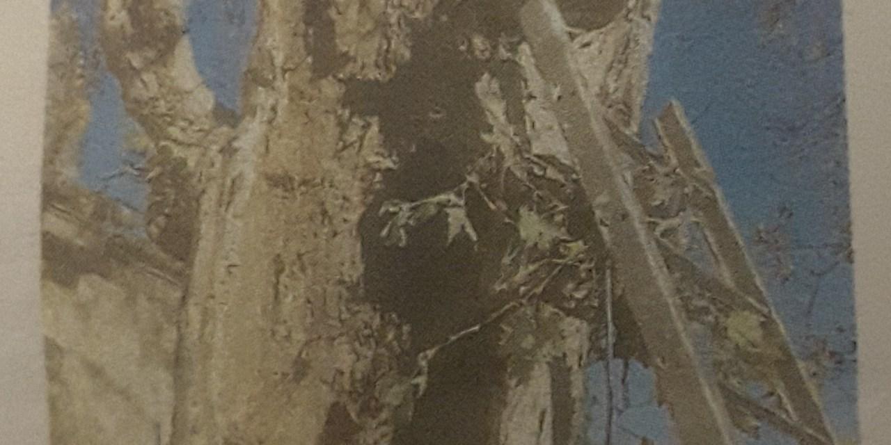 Il platano abbattuto albero della discordia