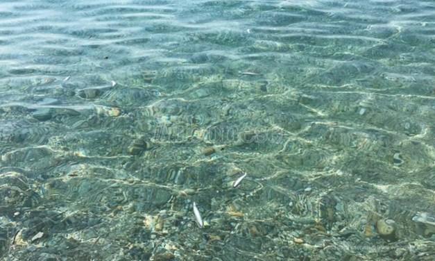 Moria di pesci nel Vibonese, Paolillo (Wwf): «Il caldo non c'entra, bisogna indagare»